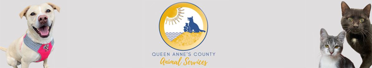 ANIMAL SERVICES BANNER shorter-wide